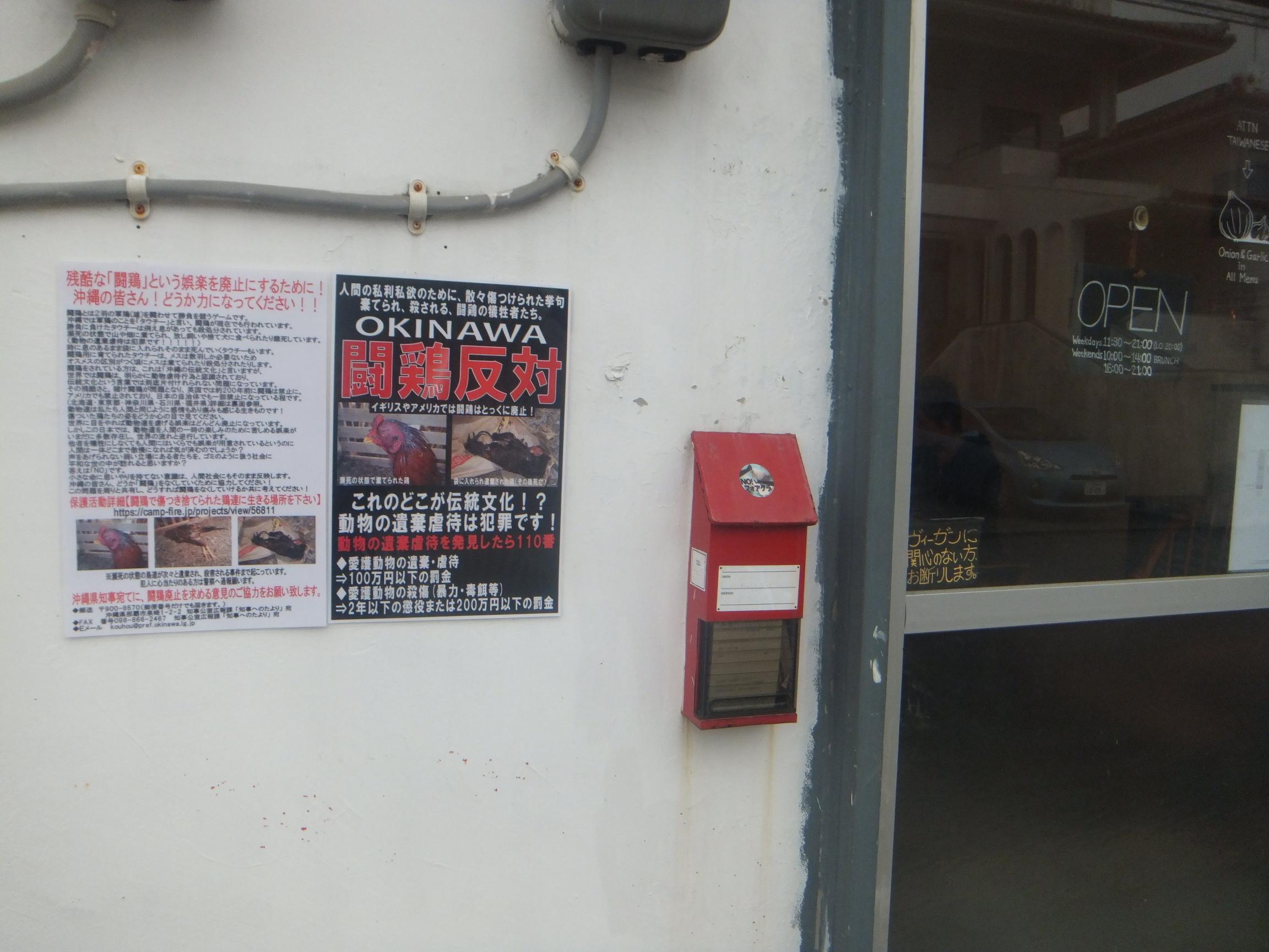 okinawagub4.jpg