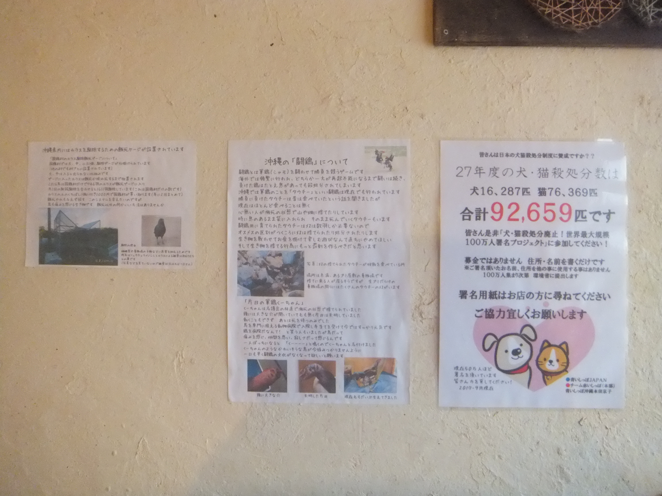 okinawagub5.jpg