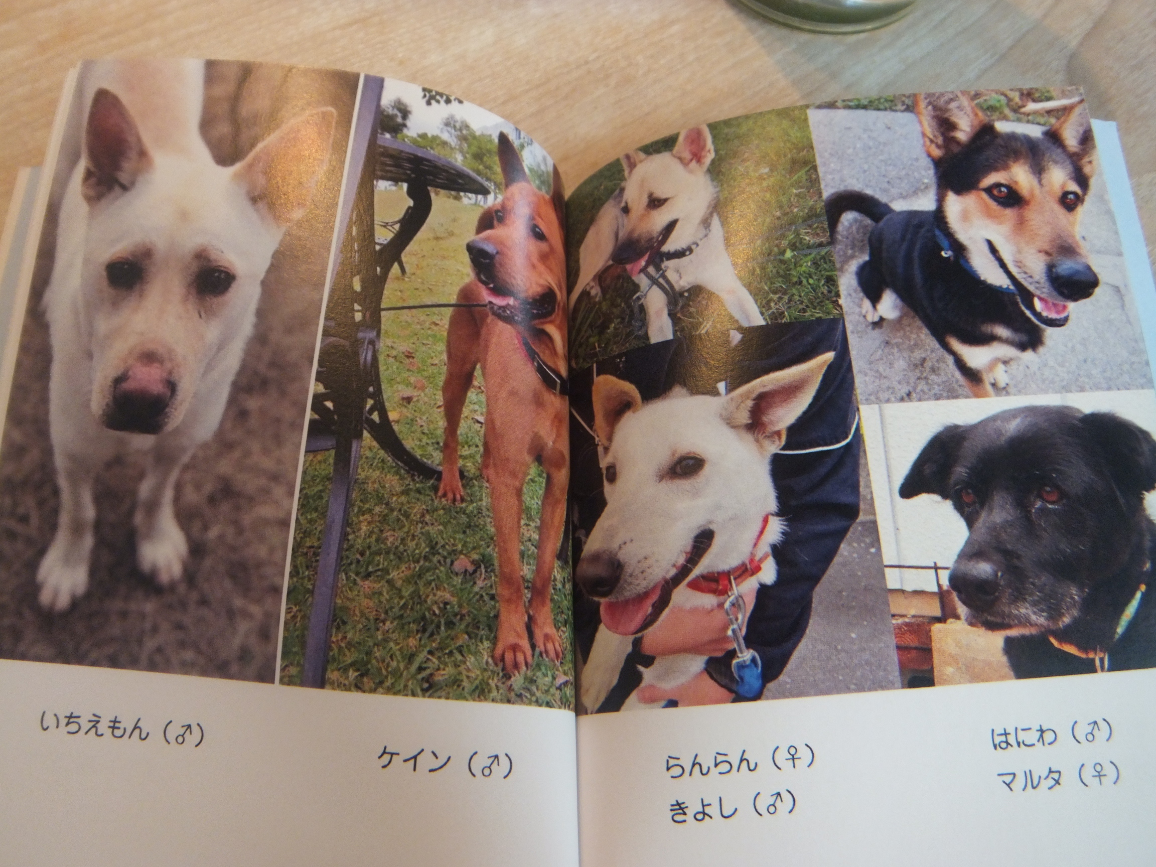okinawapl17.jpg