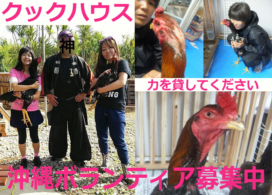 okinawatoukeitop1.jpg