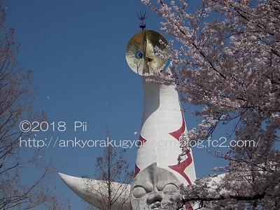 桜 2018-3-30 (1)