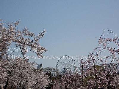 桜 2018-3-30 (5)