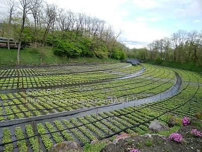 長野県・安曇野市 旅行記① 2018-4-25-26 (6)
