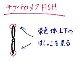サブテロメアFISH0405 - コピー