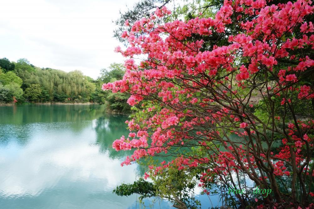 紅花と緑池*
