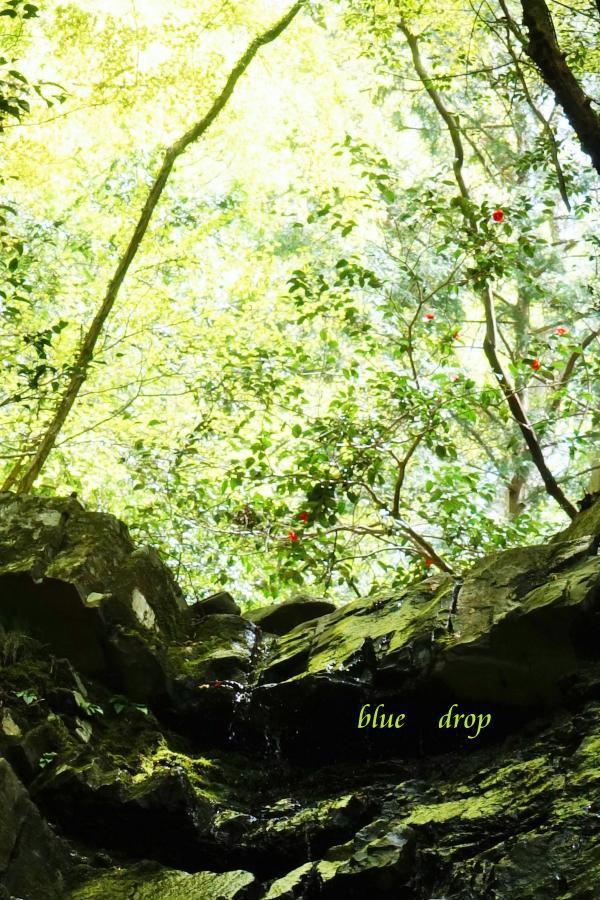 谷の新緑*