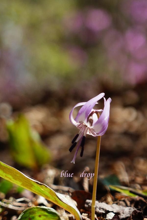 春色の中で*