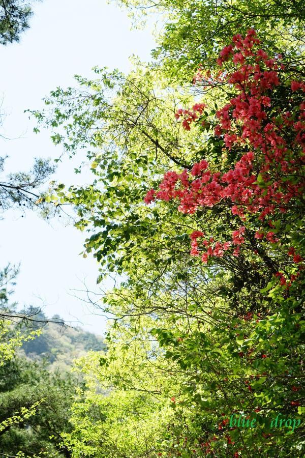赤と緑の森*