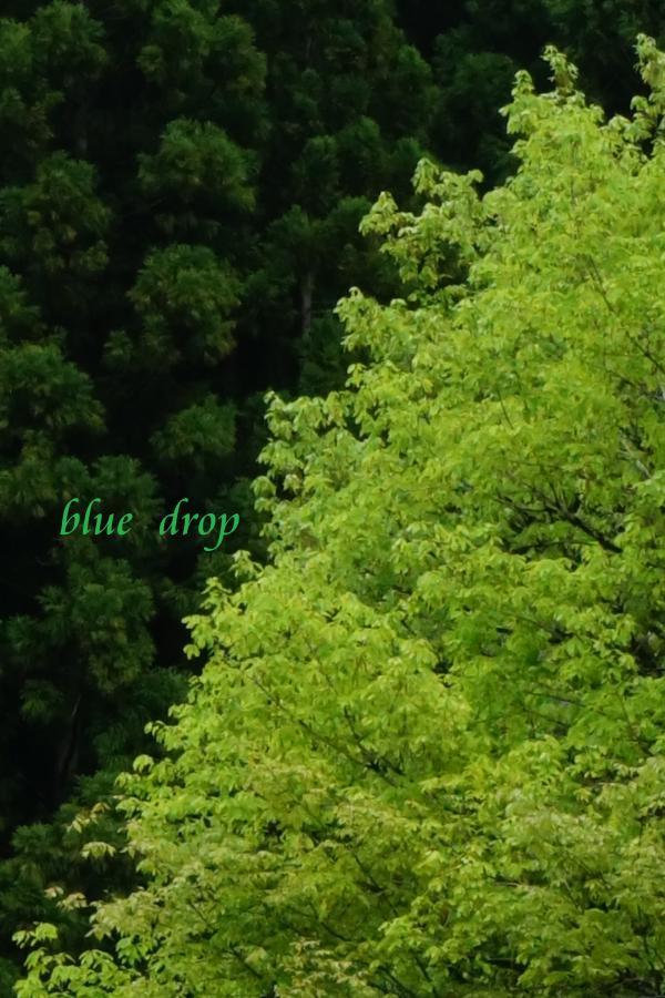 新しい緑*
