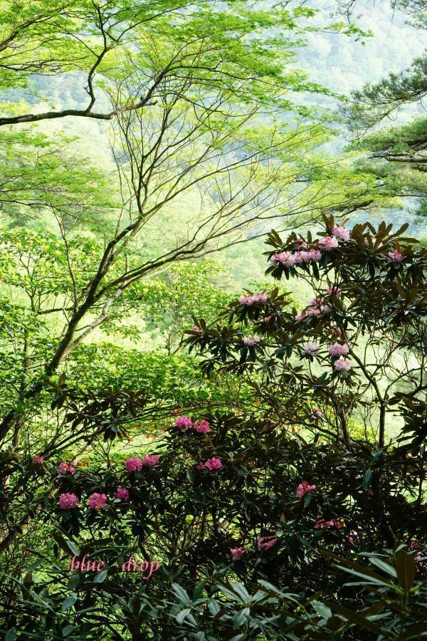 新緑と花*