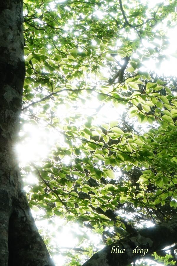透明な葉っぱ*