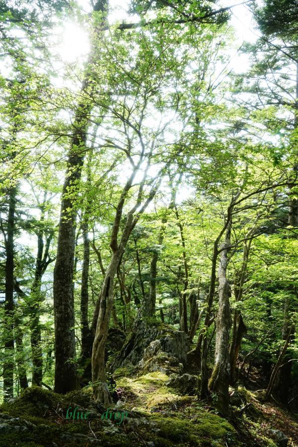 尾根道の森*