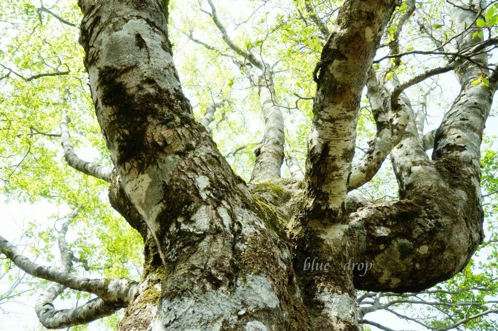 生きる樹*