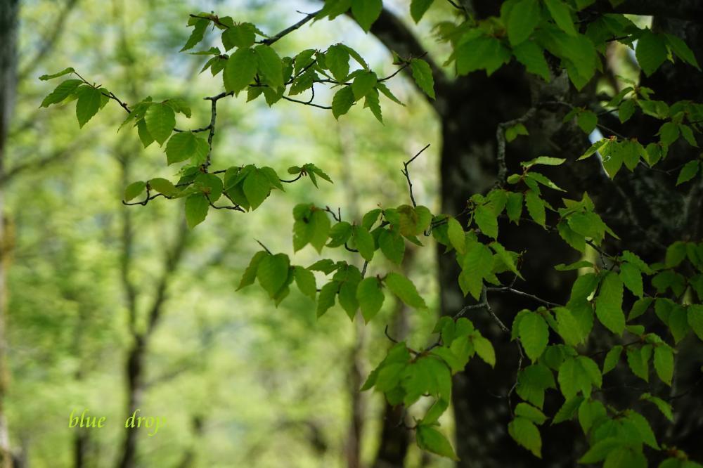 若葉の森*