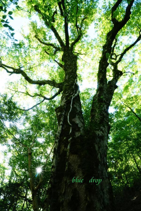 美しき森*