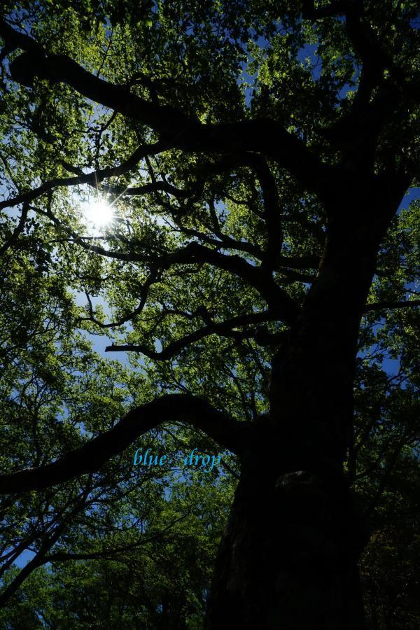 光のある森*