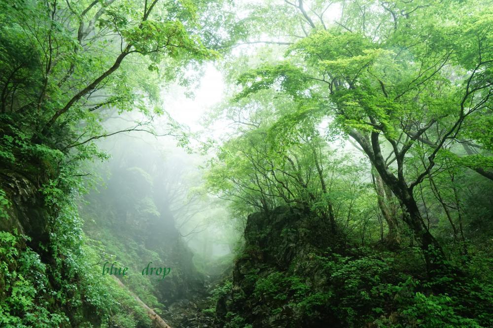 霧の奥へ*