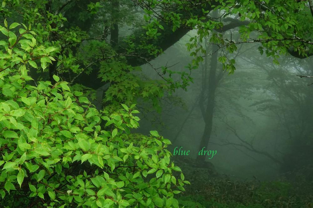 不思議の森*
