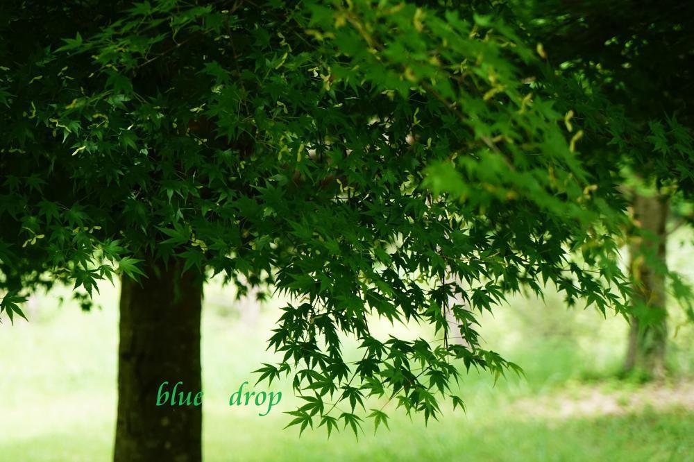 綺麗な深緑*