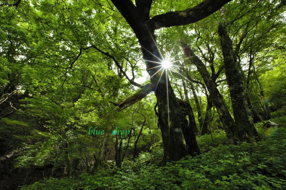 光があふれる森*