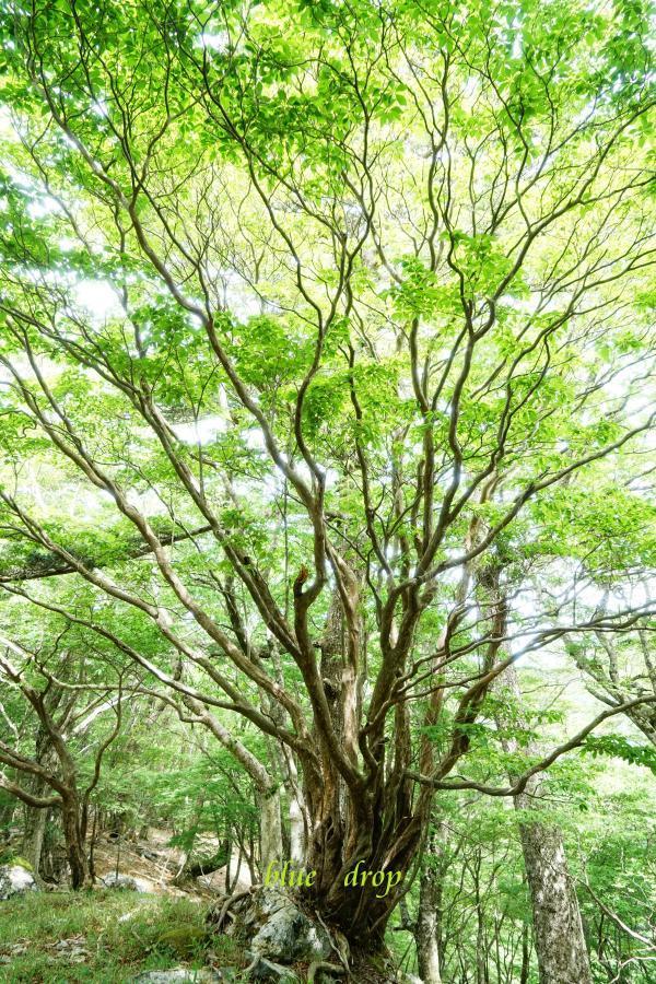 放射状の木*