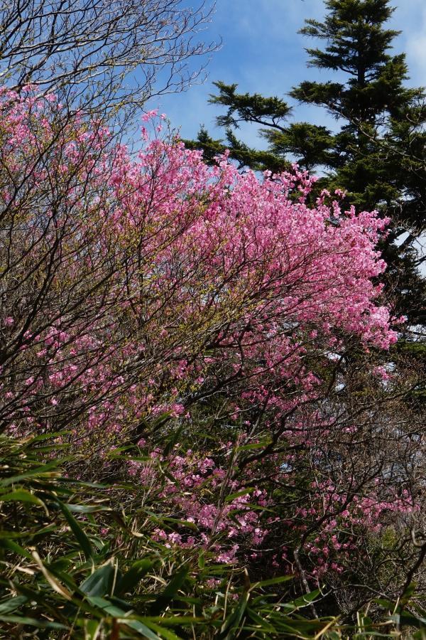 春を謳歌する*