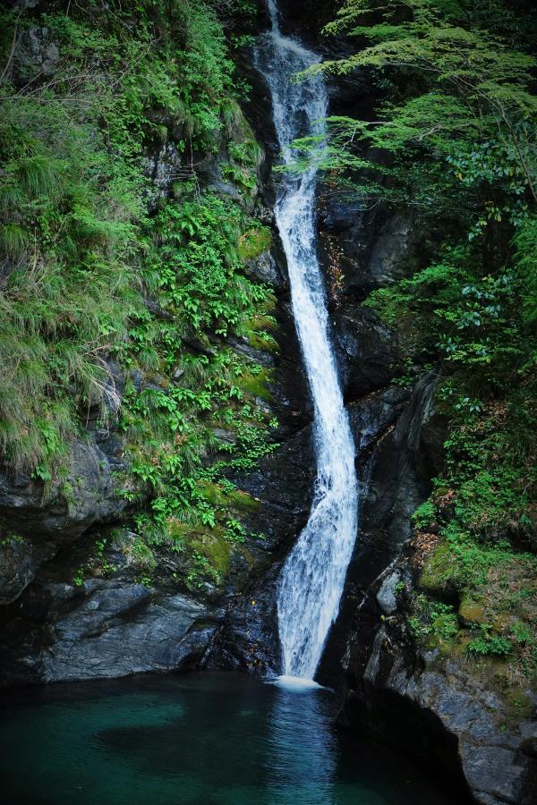 滝と新緑*