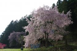 2018-桜8