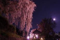 2018-桜5