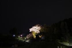2018-桜6