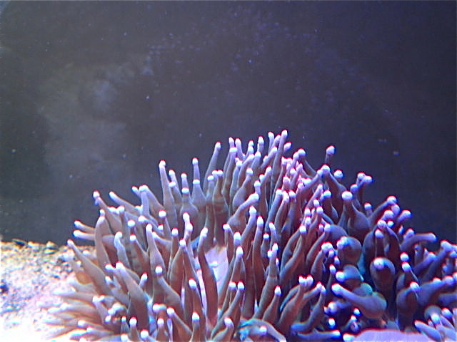 P4220014.jpg