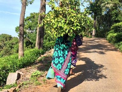 木を運ぶ女性