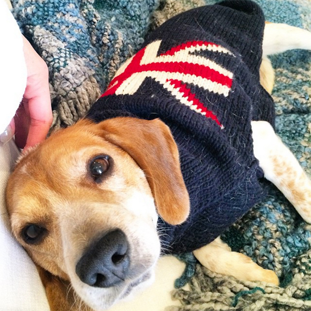 8-meghan-markle-dog-with-uk-flag-sweater[1]