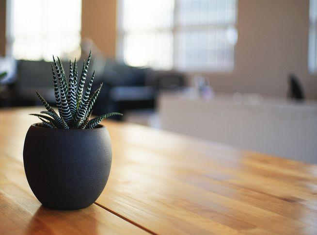 リビング 観葉植物黒