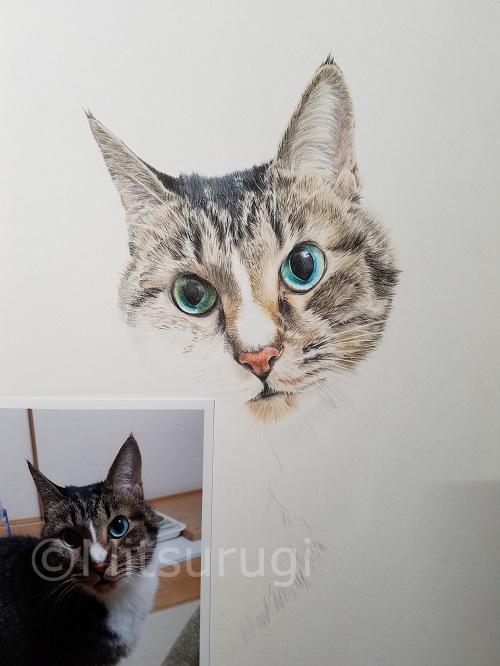 絵 イラスト ポートレート 肖像画 猫 途中