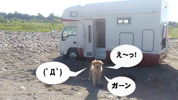 kawasemi21.jpg