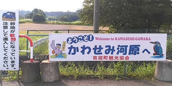 kawasemi6.jpg