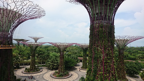 Garden by the bay (9)