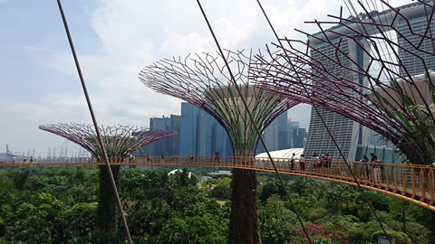 Garden by the bay (6)