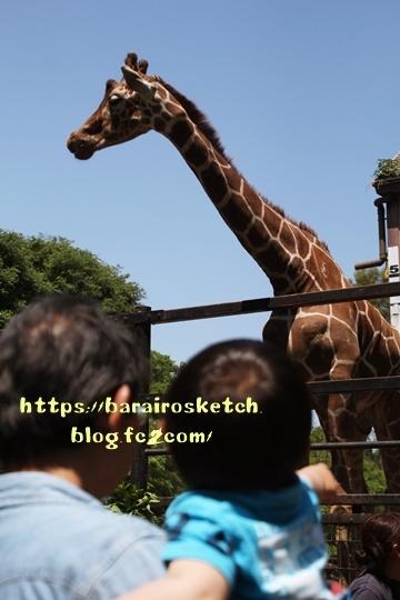 動物園201805-11
