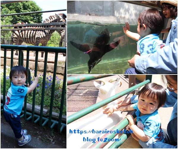 動物園201805-12