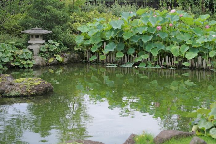高尾駒木野庭園3380