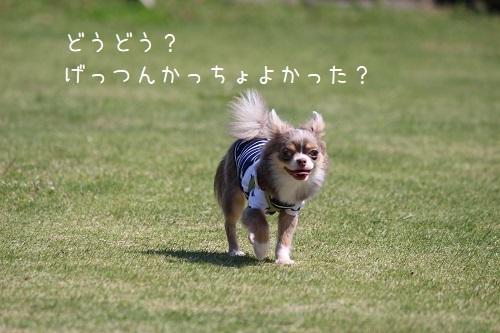 IMG_457.jpg