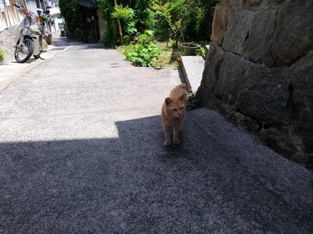 尾道猫 (1)
