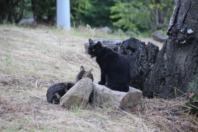 尾道猫 (2)