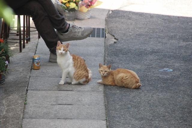 尾道猫 (4)