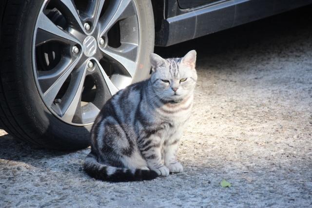 尾道猫 (3)