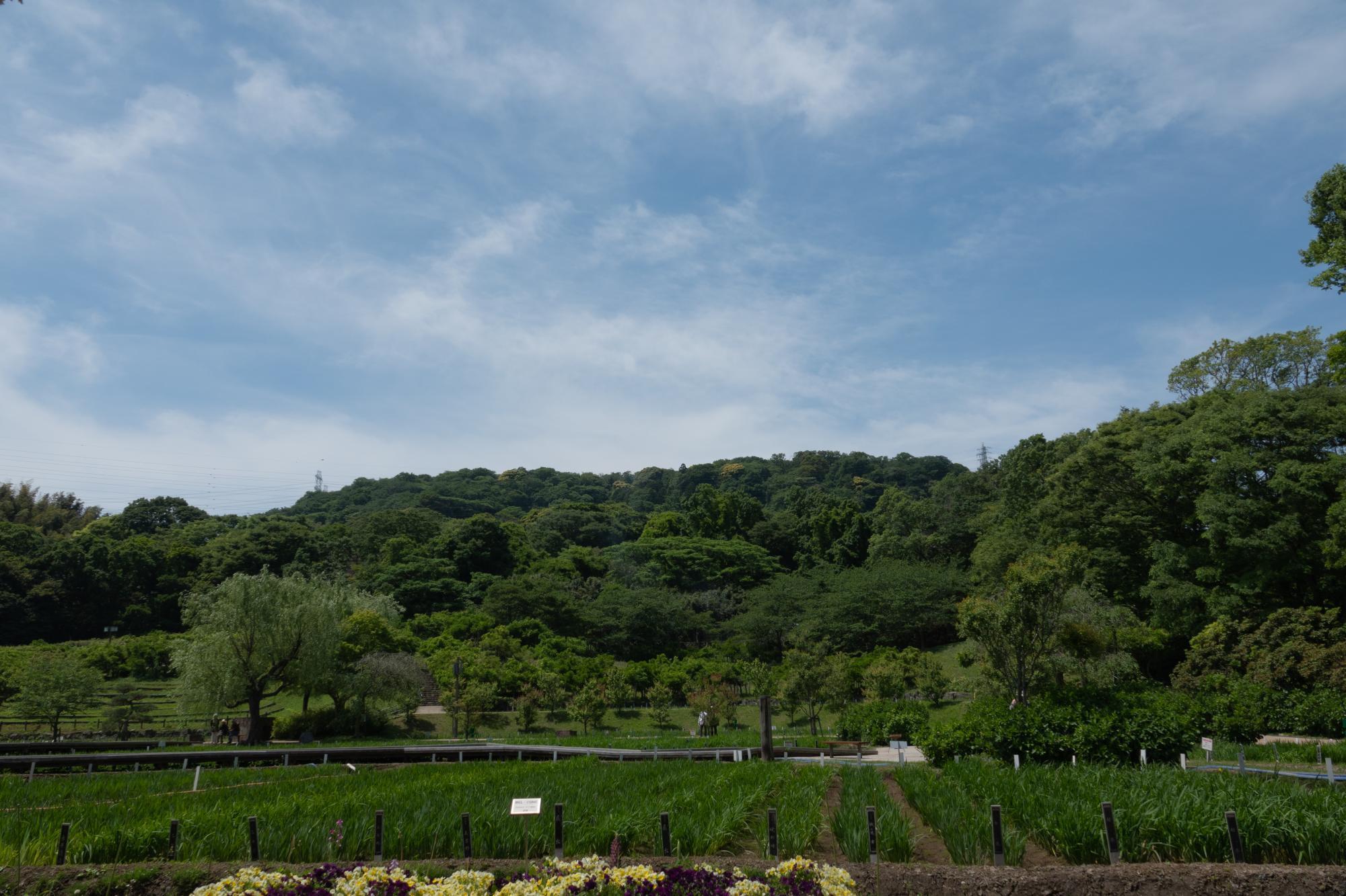 20180506-菖蒲園2