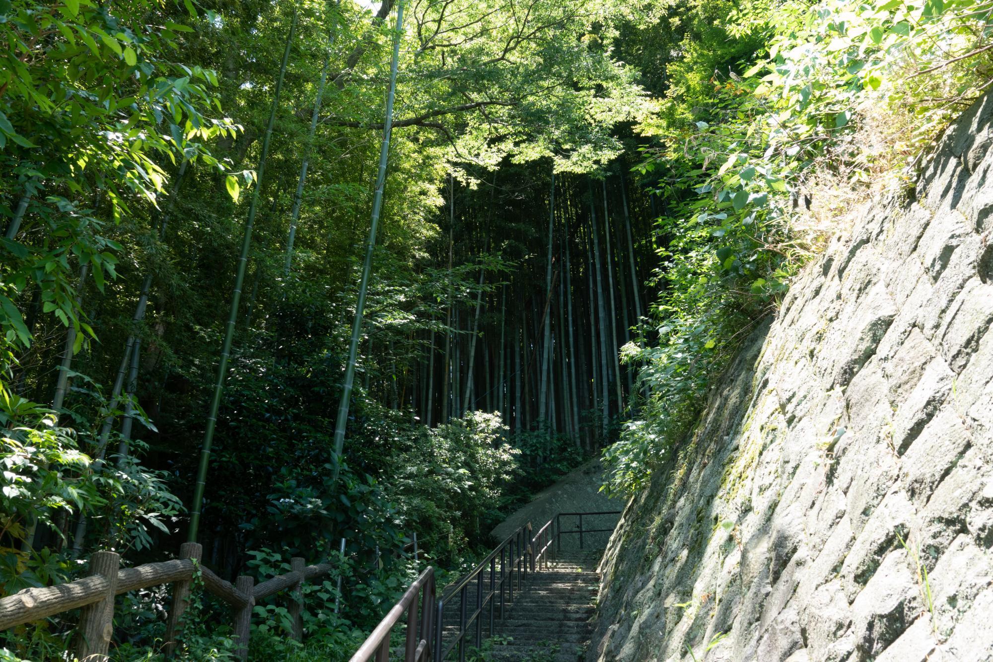 20180603-田浦梅の公園階段