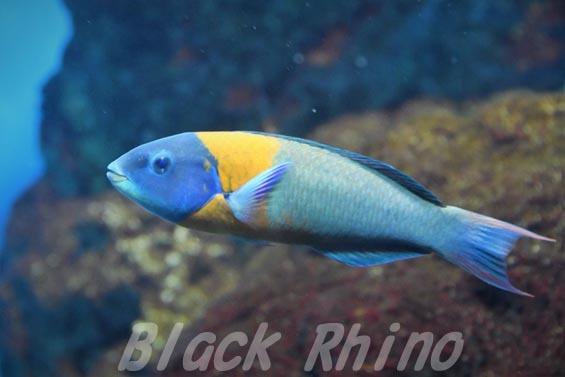 サドルラス02 葛西臨海水族園
